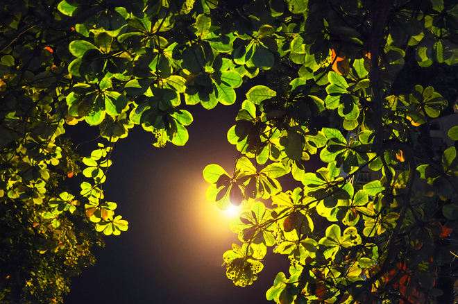 at night is the place which the trees relax in the street lights still being lit